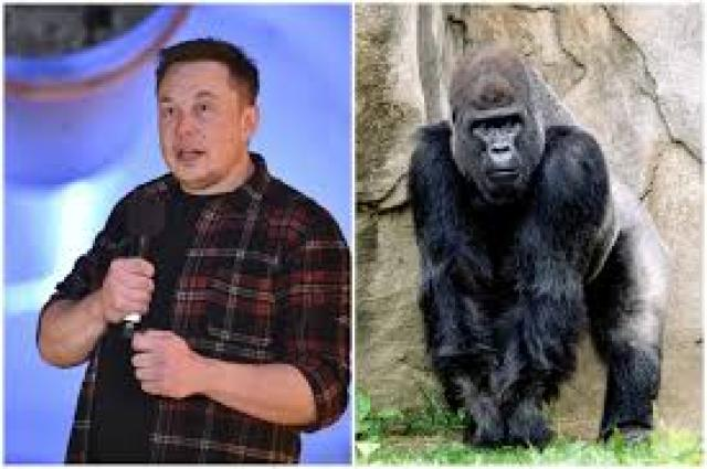 Elon Musk Just Released a Harambe Rap